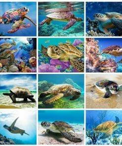 mosaïque de photo de tortue
